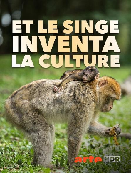 Arte HDR - Et le singe inventa la culture