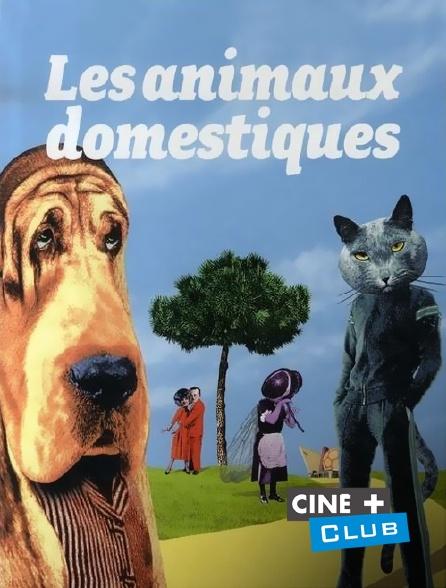 Ciné+ Club - Les animaux domestiques
