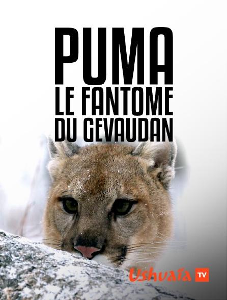 Ushuaïa TV - Puma, le fantôme du Gévaudan