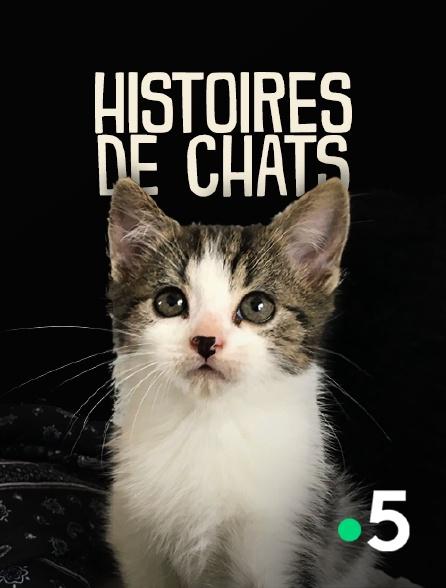 France 5 - Histoires de chats