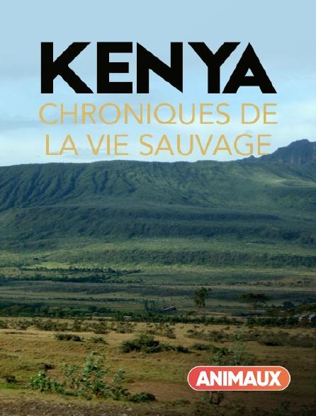 Animaux - Kenya, chroniques de la vie sauvage