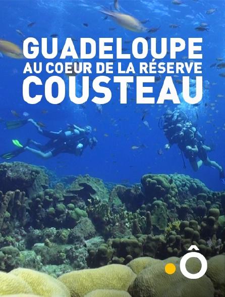 France Ô - Guadeloupe, au coeur de la réserve Cousteau