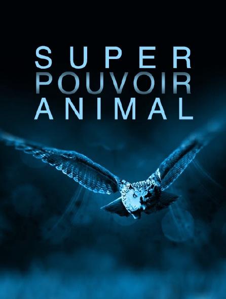 Super pouvoir animal