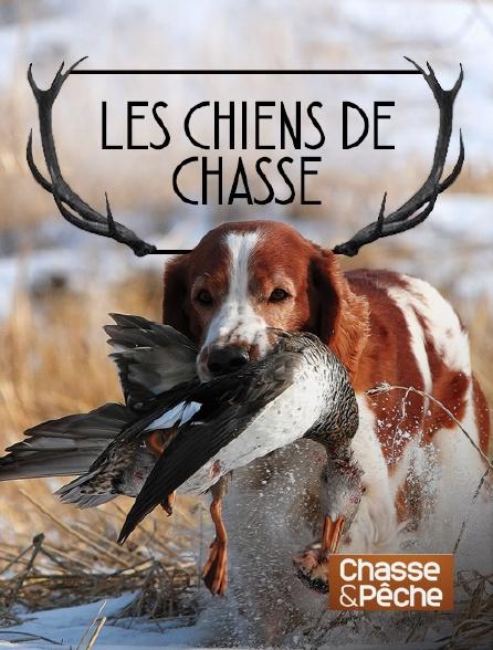 Chasse et pêche - Les chiens de chasse