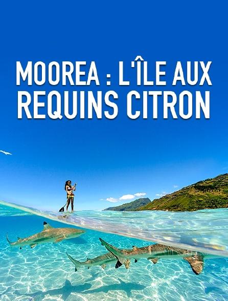 Moorea : l'île aux requins citron