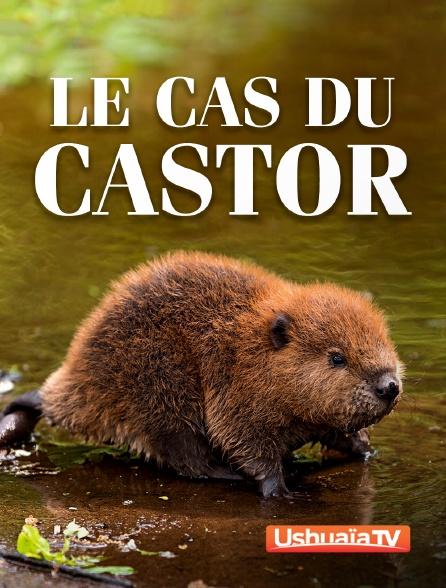 Ushuaïa TV - Le cas du castor