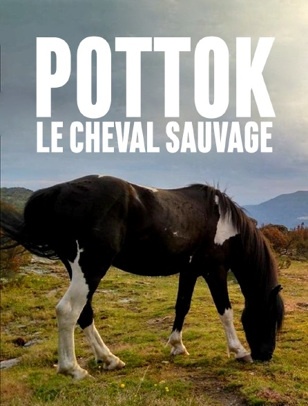 Pottok, le cheval sauvage