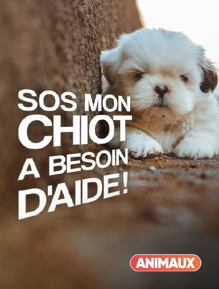 Animaux - SOS mon chiot a besoin d'aide !