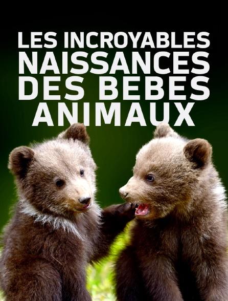 Les incroyables naissances des bébés animaux