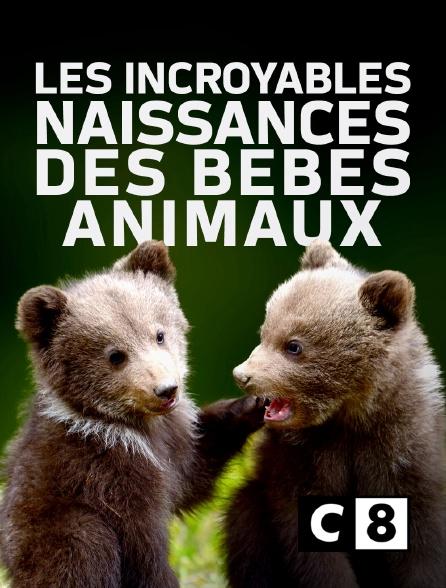 C8 - Les incroyables naissances des bébés animaux