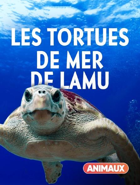 Animaux - Les tortues de mer de Lamu
