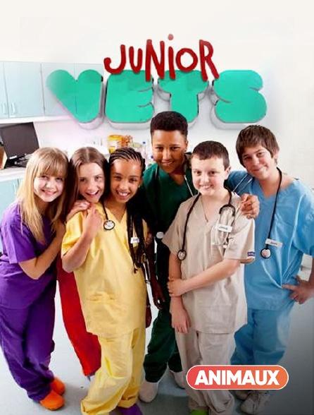 Animaux - Junior Vets