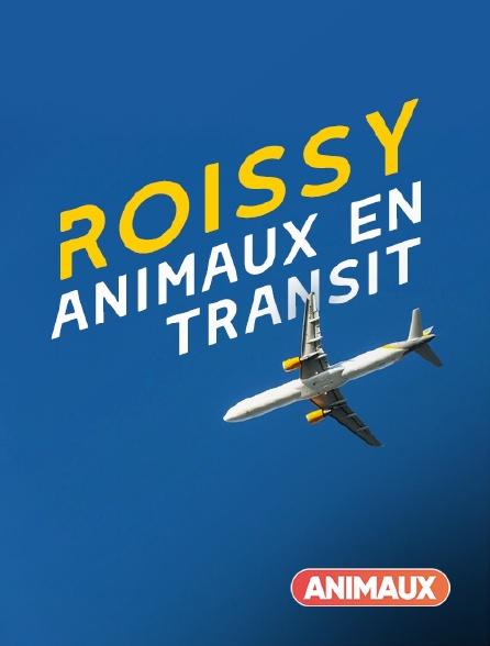 Animaux - Roissy, animaux en transit