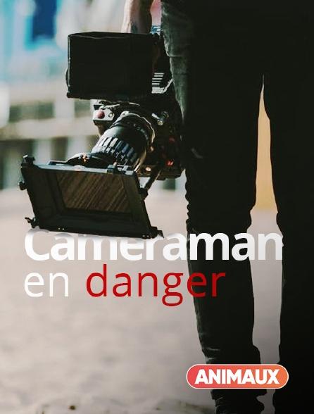 Animaux - Cameraman en danger