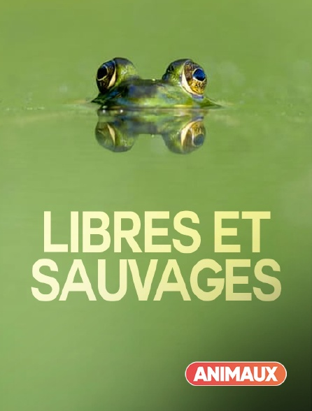 Animaux - Libres et sauvages