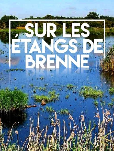 Sur les étangs de Brenne