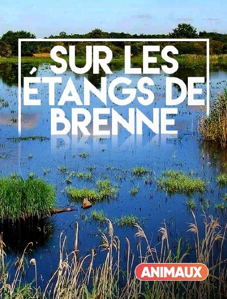 Animaux - Sur les étangs de Brenne