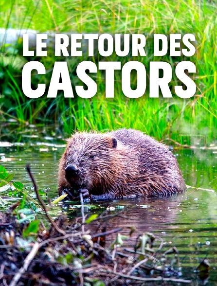 Le retour des castors
