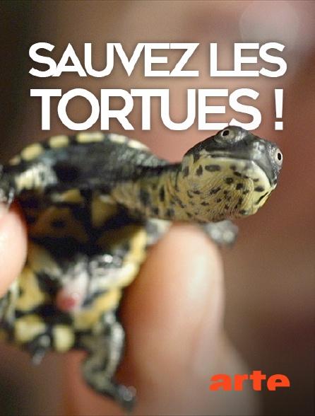 Arte - Sauvez les tortues !