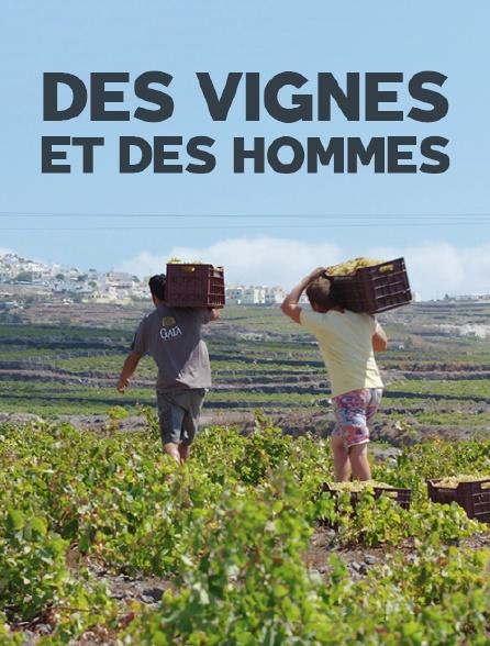 Des vignes et des hommes