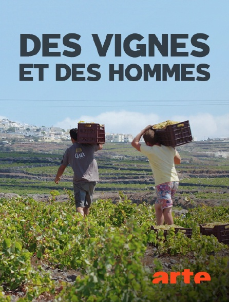 Arte - Des vignes et des hommes