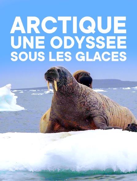 Arctique, une odyssée sous les glaces