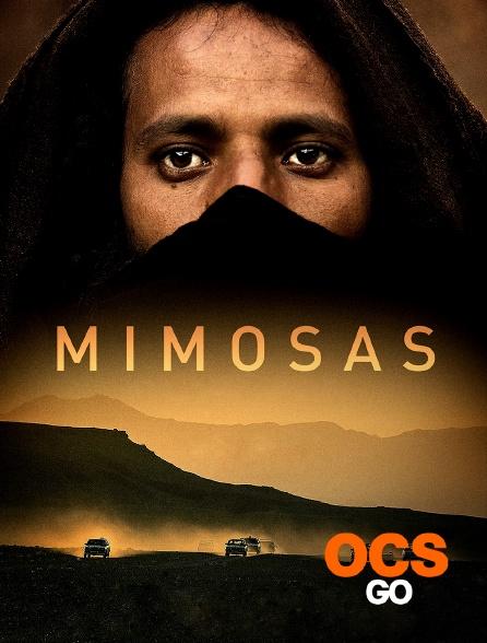 OCS Go - Mimosas, la voie de l'Atlas