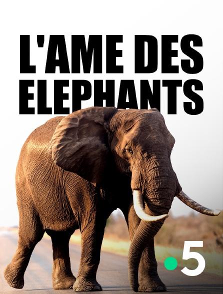 France 5 - L'âme des éléphants