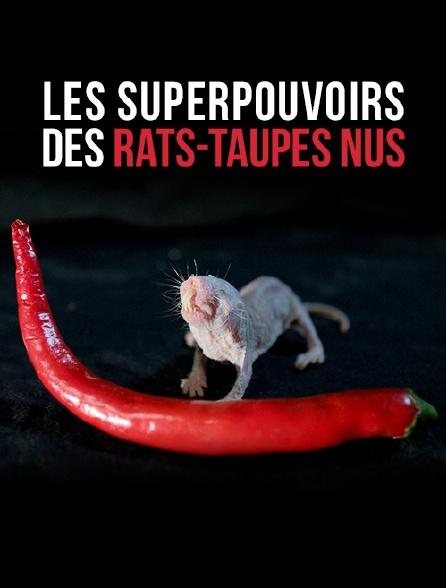 Les superpouvoirs des rats-taupes nus