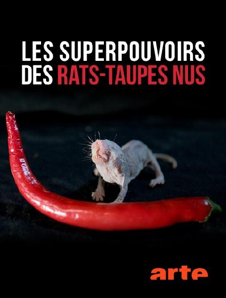Arte - Les superpouvoirs des rats-taupes nus