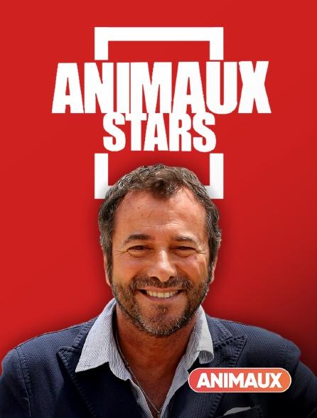Animaux - Animaux stars