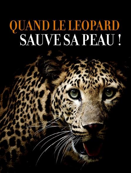 Quand le léopard sauve sa peau !