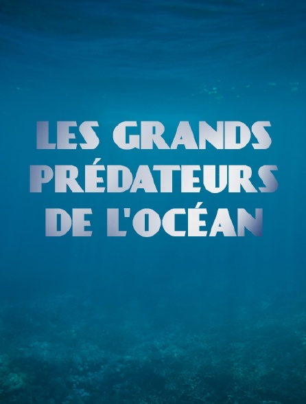 Les grands prédateurs de l'océan
