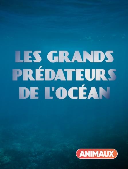 Animaux - Les grands prédateurs de l'océan