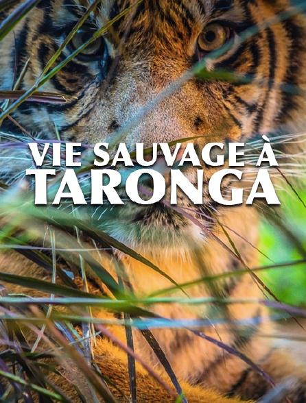 Vie sauvage à Taronga
