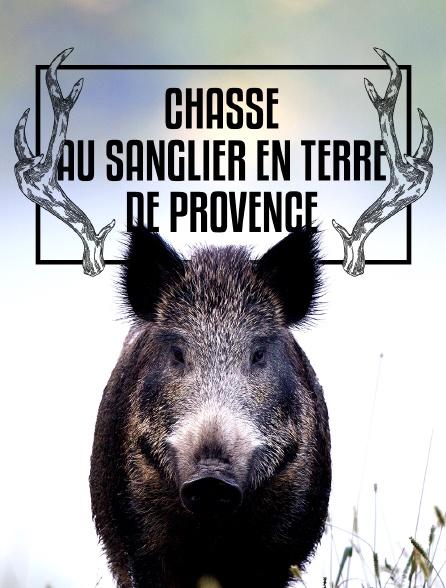Chasse au sanglier en terre de Provence