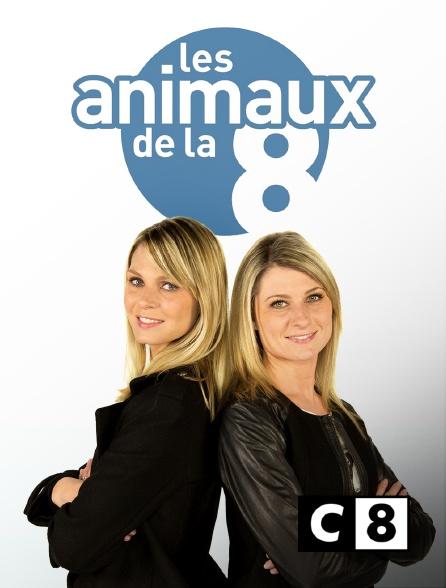 C8 - Les animaux de la 8