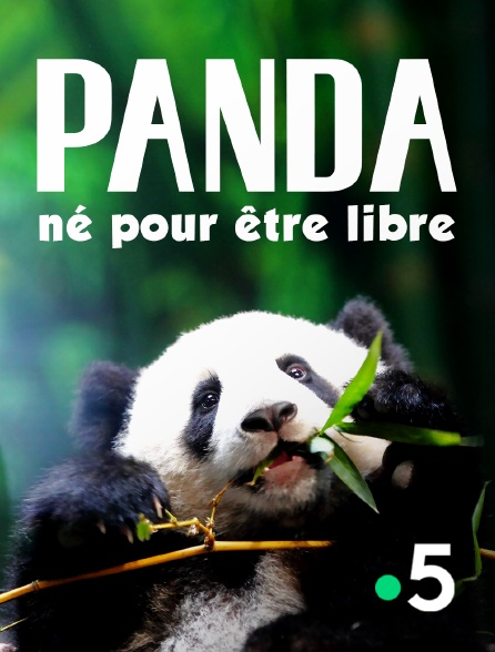 France 5 - Panda, né pour être libre