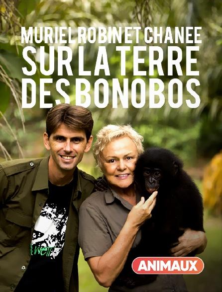 Animaux - Le messager : Muriel Robin et Chanee sur la terre des bonobos