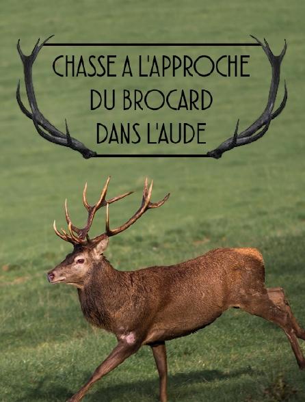 Chasse à l'approche du brocard dans l'Aude
