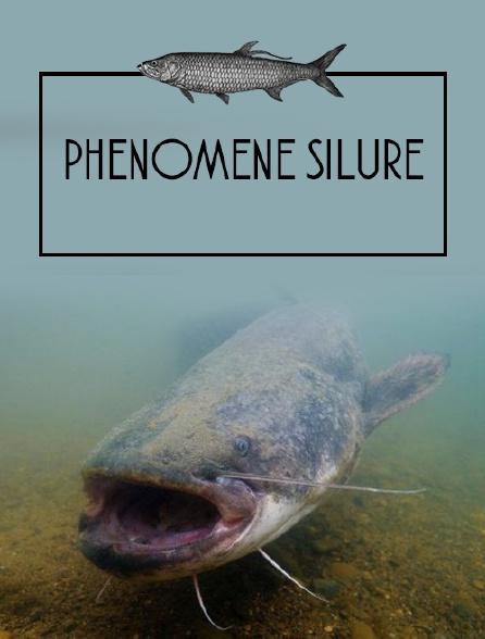 Phénomène silure