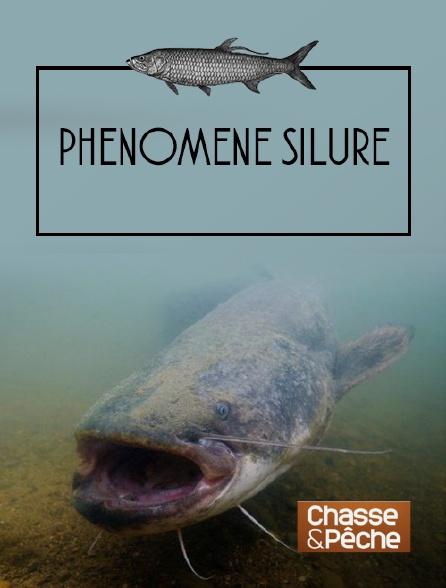 Chasse et pêche - Phénomène silure
