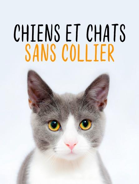 Chiens et chats sans collier