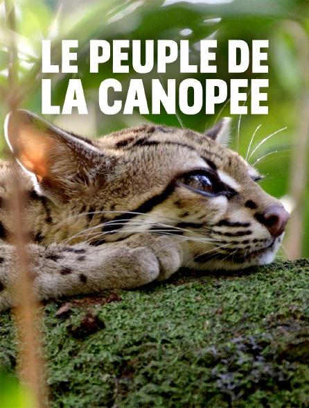 Le peuple de la canopée