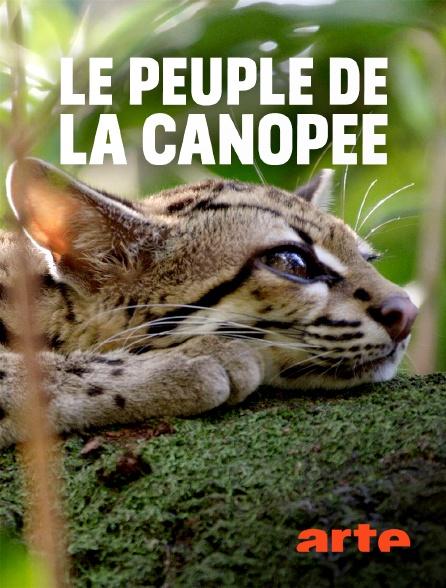 Arte - Le peuple de la canopée