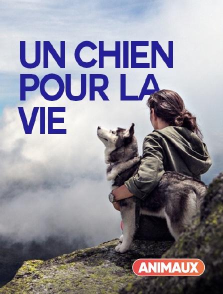 Animaux - Un chien pour la vie