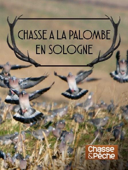 Chasse et pêche - Chasse à la palombe en Sologne