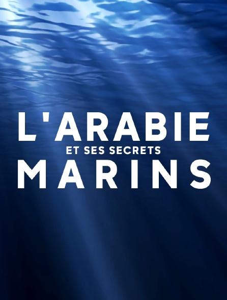 L'Arabie et ses secrets marins
