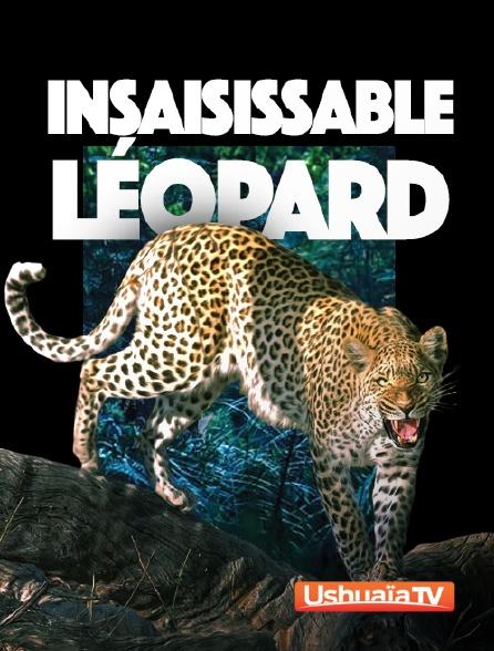 Ushuaïa TV - Insaisissable léopard