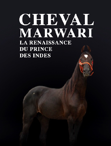 Cheval Marwari, la renaissance du prince des Indes